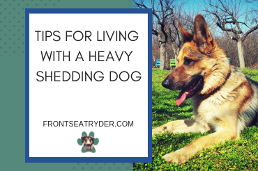 Tips For Living With a Heavy Shedding Dog