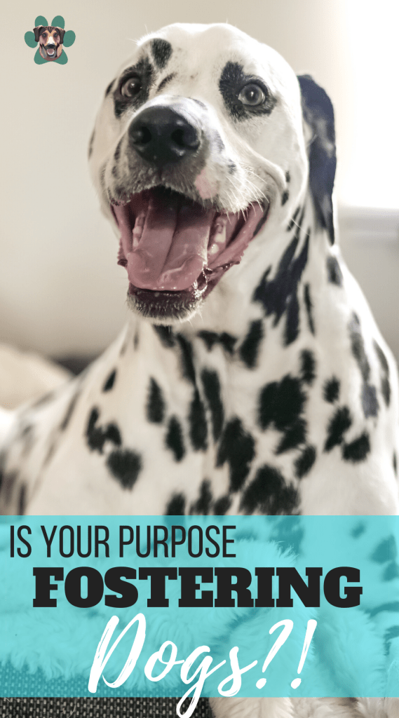Fostering Dogs May Be your Purpose
