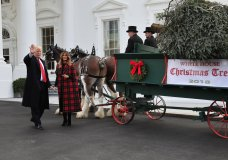 President Donald Trump and first lady Melania Trump receive the White House Christmas Tree, at the North Portico of the White House, in Washington, Monday, Nov. 19, 2018. The North Carolina-grown 19 1/2-foot-tall Fraser Fir will be displayed in the Blue Room of the White House. (AP Photo/Manuel Balce Ceneta)