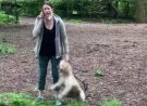 Dispute Over Dog In Central Park Sparks Racism Accusations