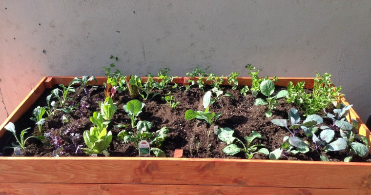 Front Yard Veggies – The Journey Begins