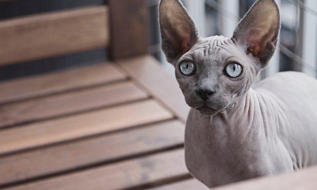 Big Ears 2