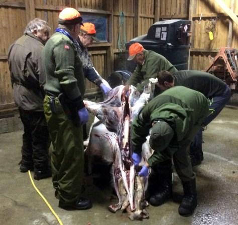 Riktig håndtering av viltkjøttet er viktig for å sikre god kvalitet