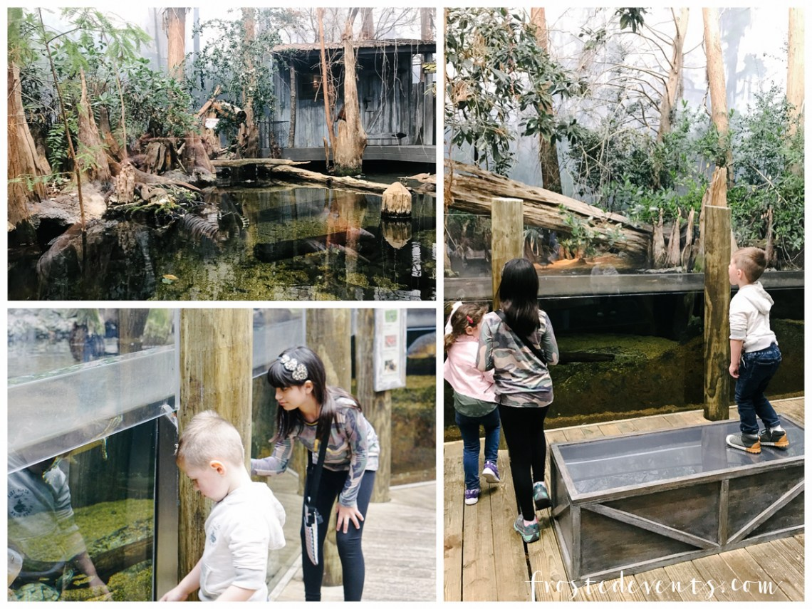 Tennessee Aquarium and Chattanooga Zoo - Chattanooga Tennessee Things to Do with Kids via Family Travel Blogger Influencer Misty Nelson