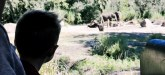 Kilimanjaro Safaris Expedition Animal Kingdom Walt Disney World