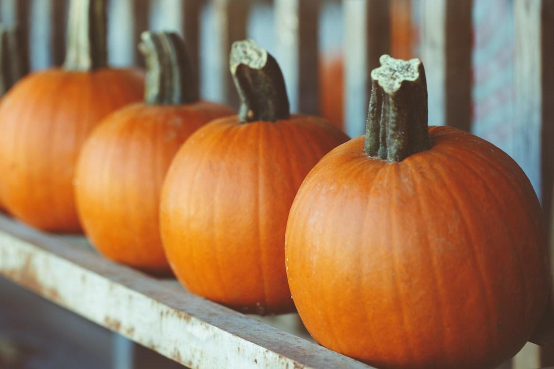Pumpkin Farm Near Me- Pumpkin Patches, Pumpkin Picking and Pumpkin Ideas via Misty Nelson @frostedevents