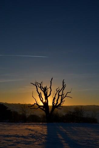 55.december tree