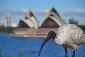 63.ibis in sydney