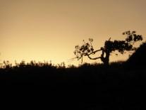 76.tree silhouette