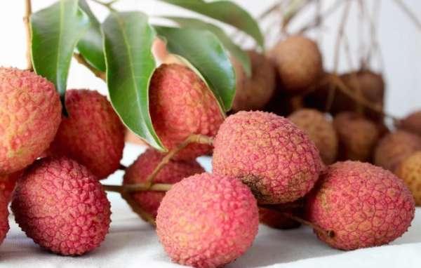 Fruits Lica