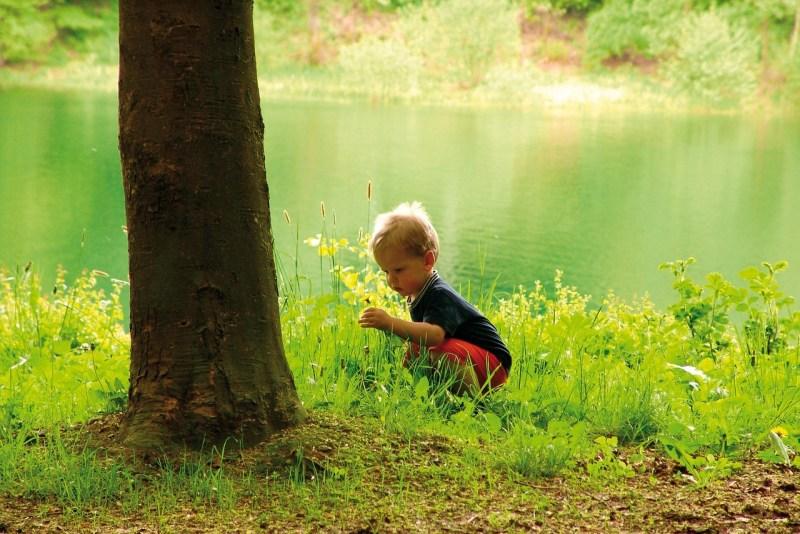 Der Bio-Baustoff Holz ist ein positiver Beitrag zum Umweltschutz