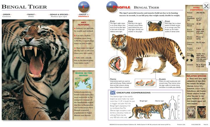 bengal tiger card front