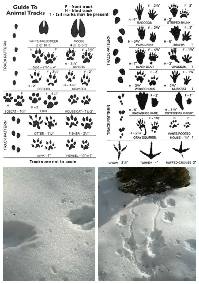 Track-Footprints-in-the-Snow-Collage-smaller