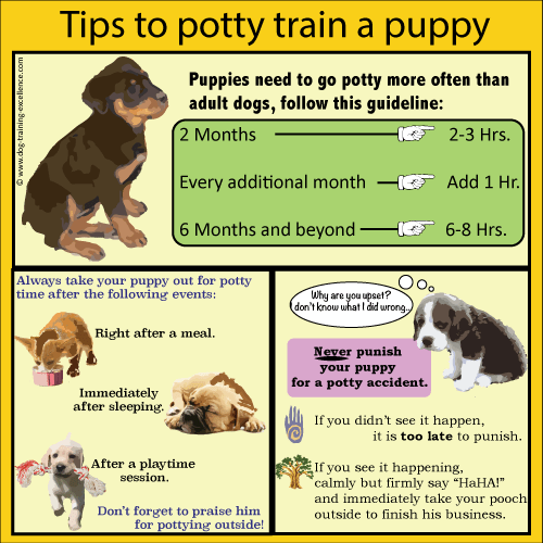 Tips-to-potty-train-a-puppy