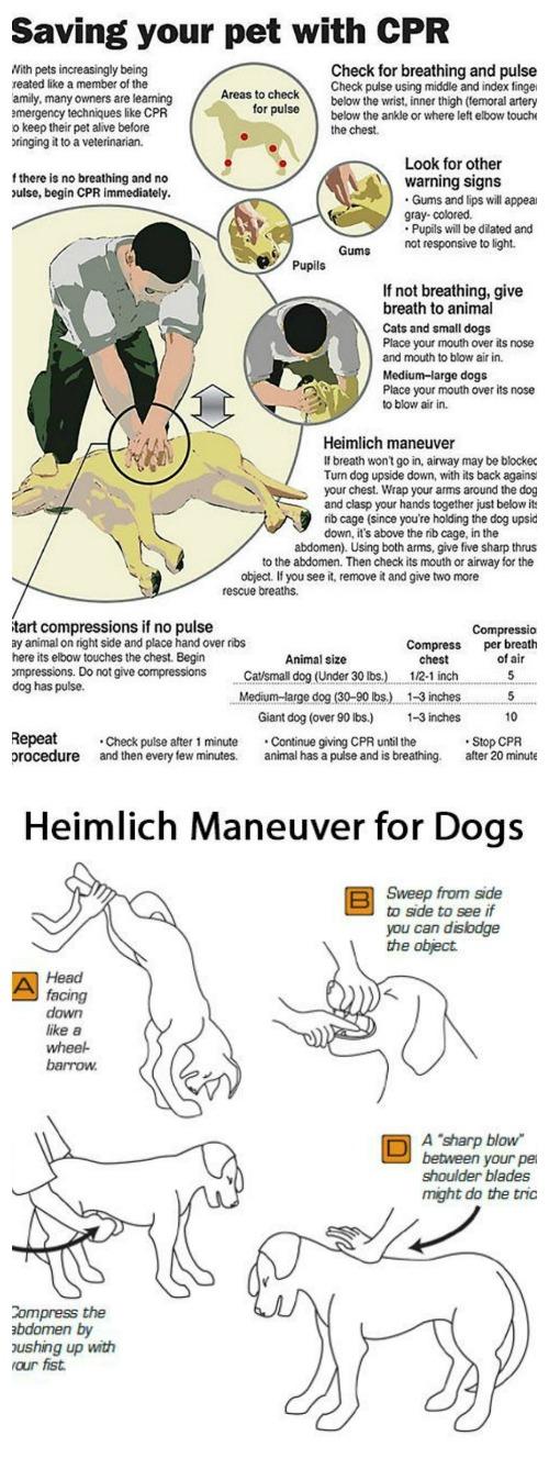 cpr-heimlich-dogs