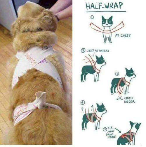 dog-wrap