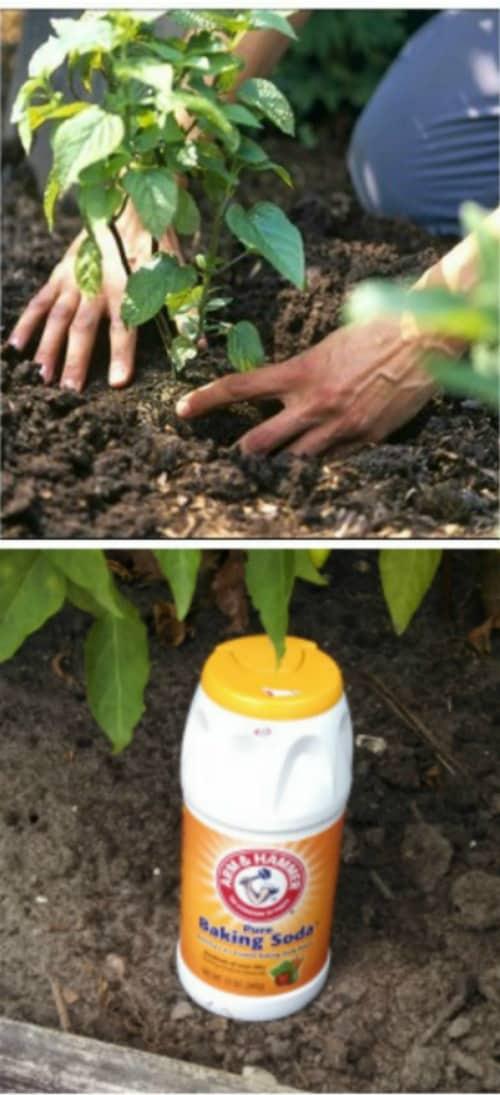 Gardening Hacks and Tips for the Wannabe Gardener