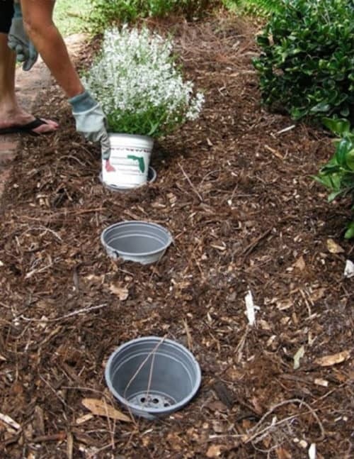 Gardening Hack and Tip for changing flower pots