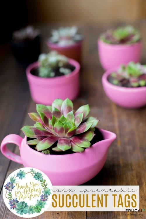 Succulent Gift Tags
