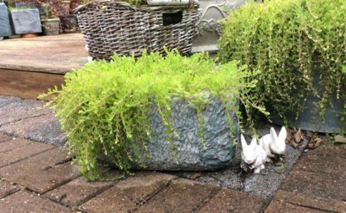 Styrofoam cooler into a DIY Planter