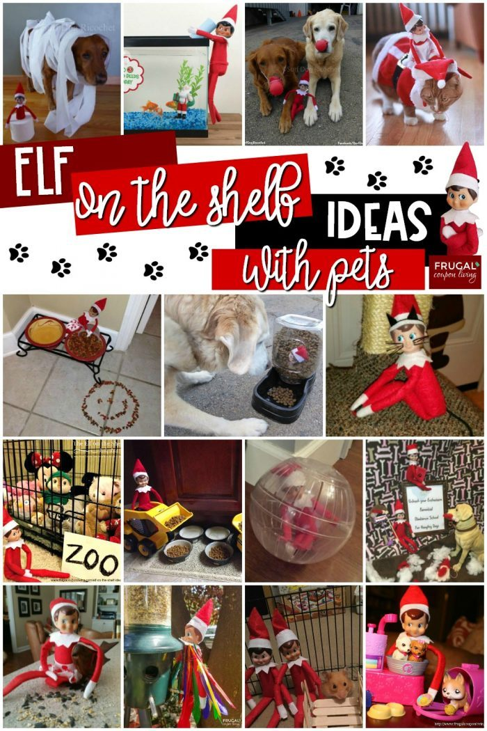 Elf on the Shelf Ideas with Pets