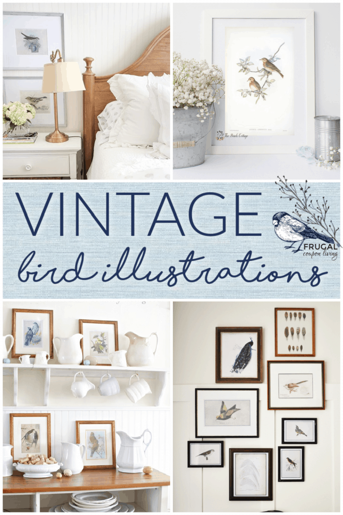 examples of vintage bird prints with free downloads