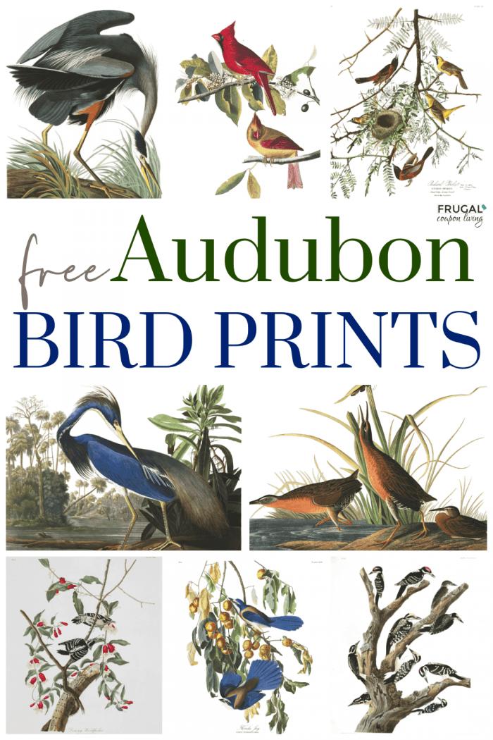 where to print Audubon prints free library