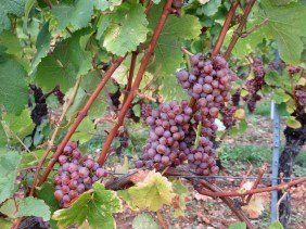 More reasons why the route de vins got its name