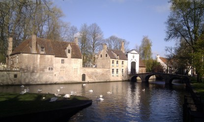 ducks and geese on the water in Bruges, Belgium