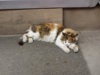 Calico cat sleeping on a step