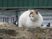 White cat sitting on a rock in Istanbul