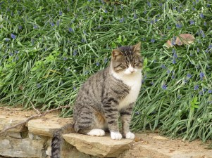 Tabby cat sitting on a stone fence in Gulhane Park, Istanbul