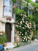 white climbing rose at a doorway