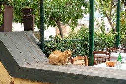 ginger cat sitting on the ledge of a restaurant in Athens, Greece