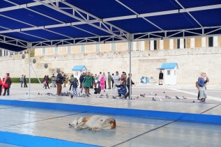 Dog laying down sleeping at the Tomb of the Unknown Soldier in Athens Greece