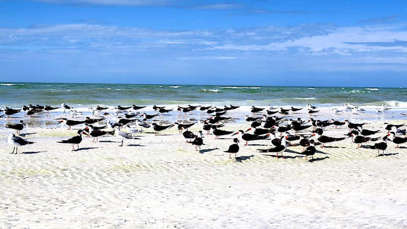 Fort de Soto Beach is very natural, including a array of Florida birds