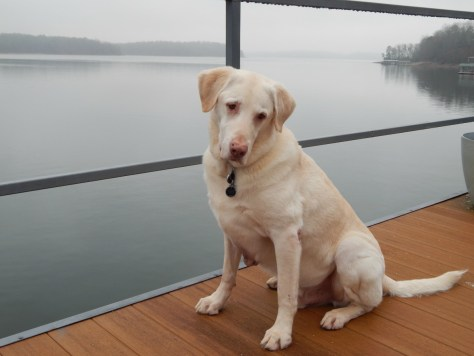 Gibson at Lake Hartwell – All this water, Mom, and I'm not swimming? Just so you know, Yes, he did get to swim! It was a bit of a shock for him when we got back to Minnesota and minus 3!