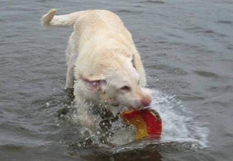 gibson frisbee