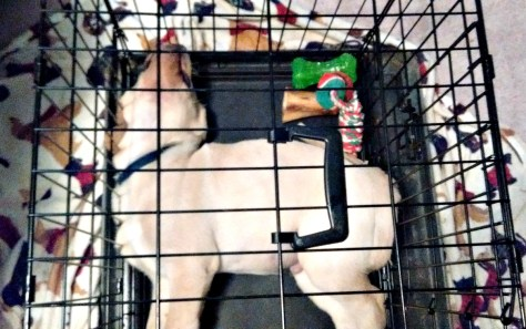 Chance had to go in a small kennel so he couldn't jump - he could have layed the long way but seems to enjoy sleeping in weird positions.
