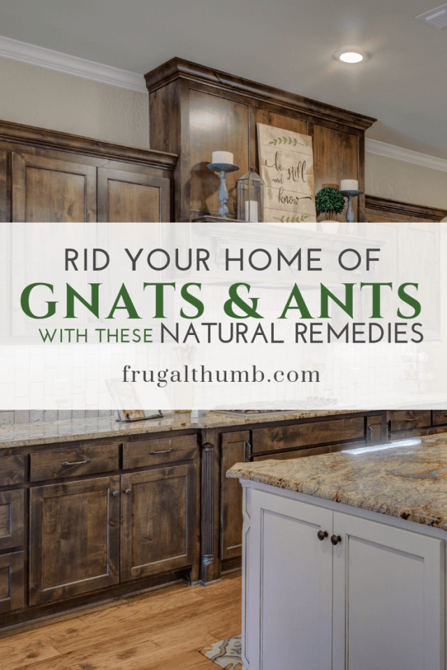 Rid Your Home of Gnats and Ants with These Natural Remedies by Frugal Thumb