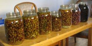 olives_5