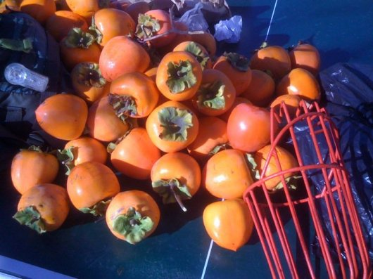persimmons_1