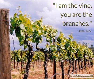 """Image of vineyard with verse, """"I am the vine, you are the branches"""" from John 15:5"""