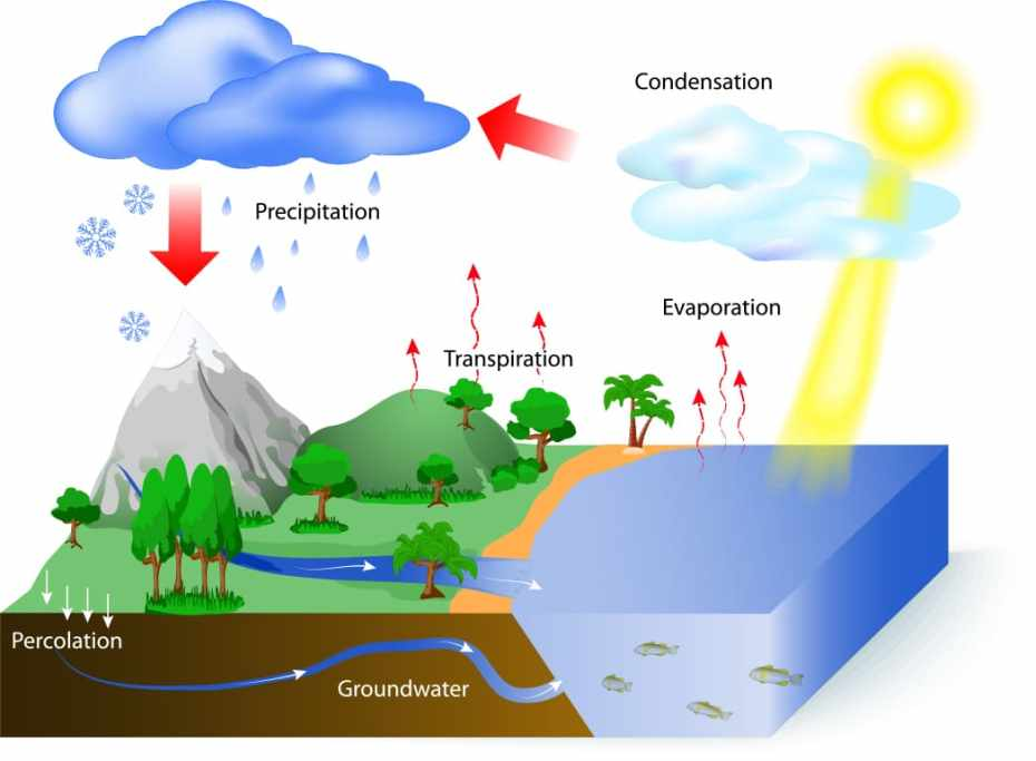 Water Cycle Display Including Precipitation, Condensation, Evaporation, Transpiration, Groundwater and Percolation