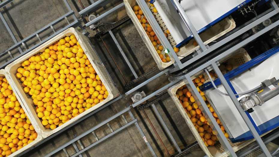 Packing House Lemons