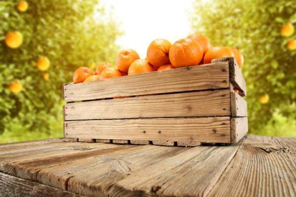 A wooden crate of oranges on a wooden table in an orchard.