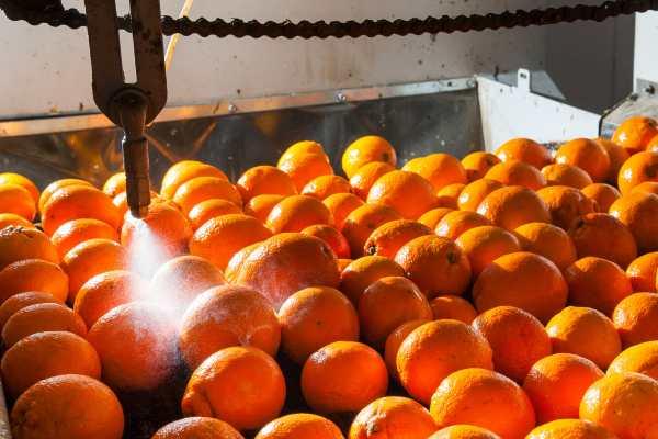 fruit waxing machine