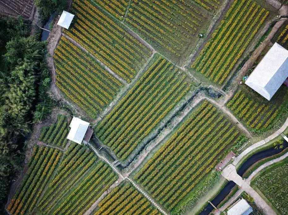 agriculture fields jungle
