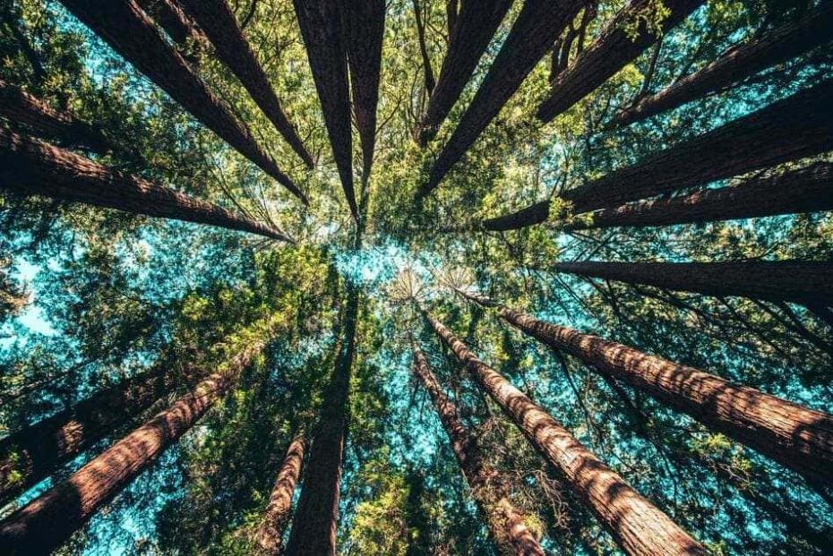 trees-forest