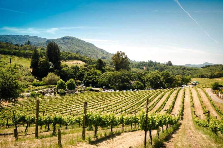 A vineyard in Sonoma, California.
